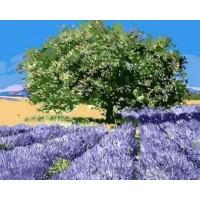 "Картина по номерам ""Дерево на лавандовом поле"""