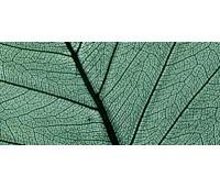 Листья сухие для декора