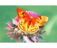 """Набор для вышивания """"Золотая бабочка"""""""